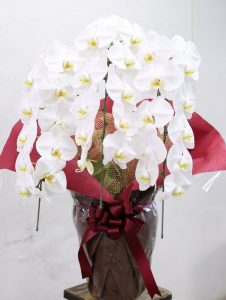 胡蝶蘭3本立て