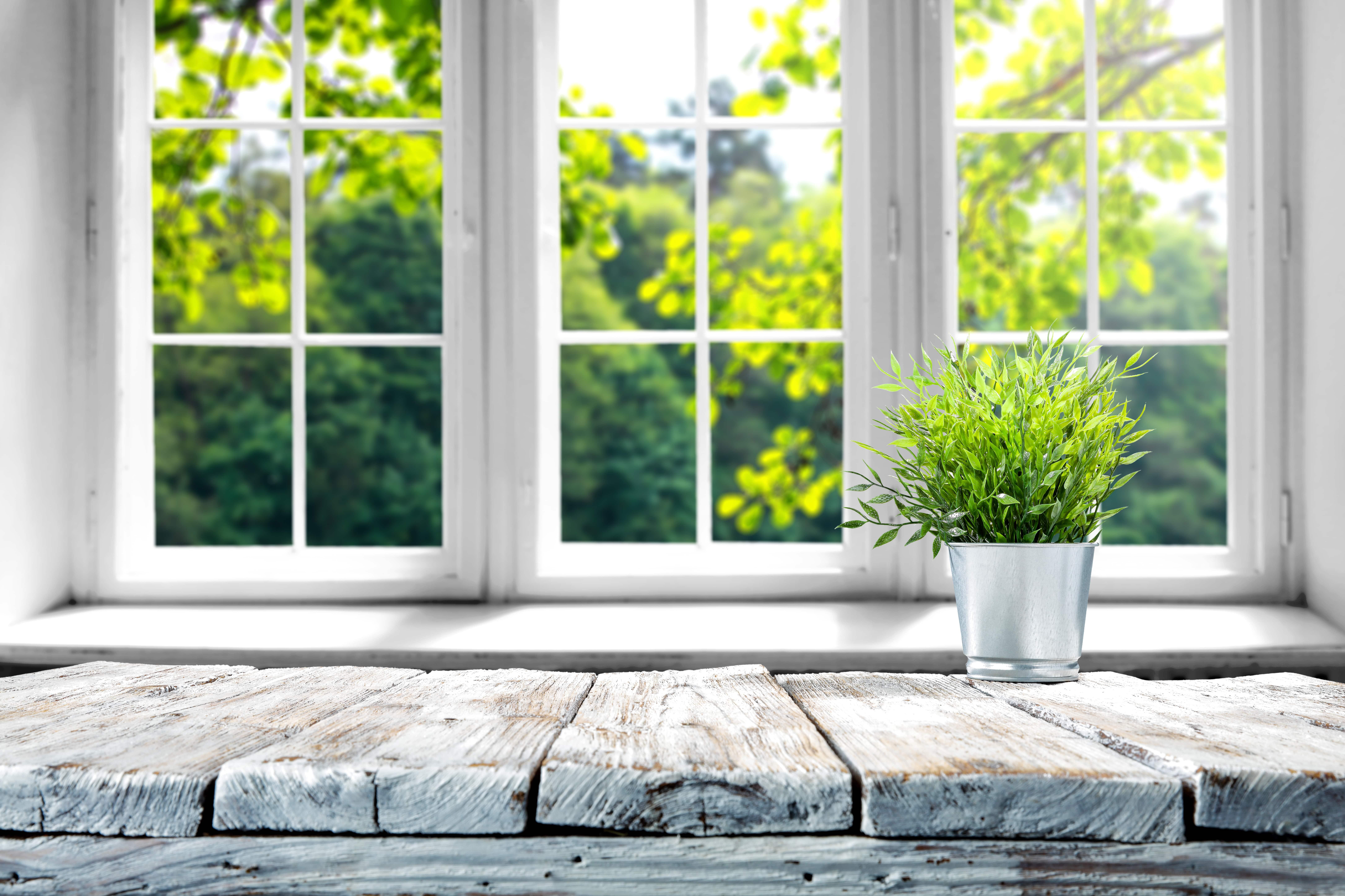 窓際にある植物