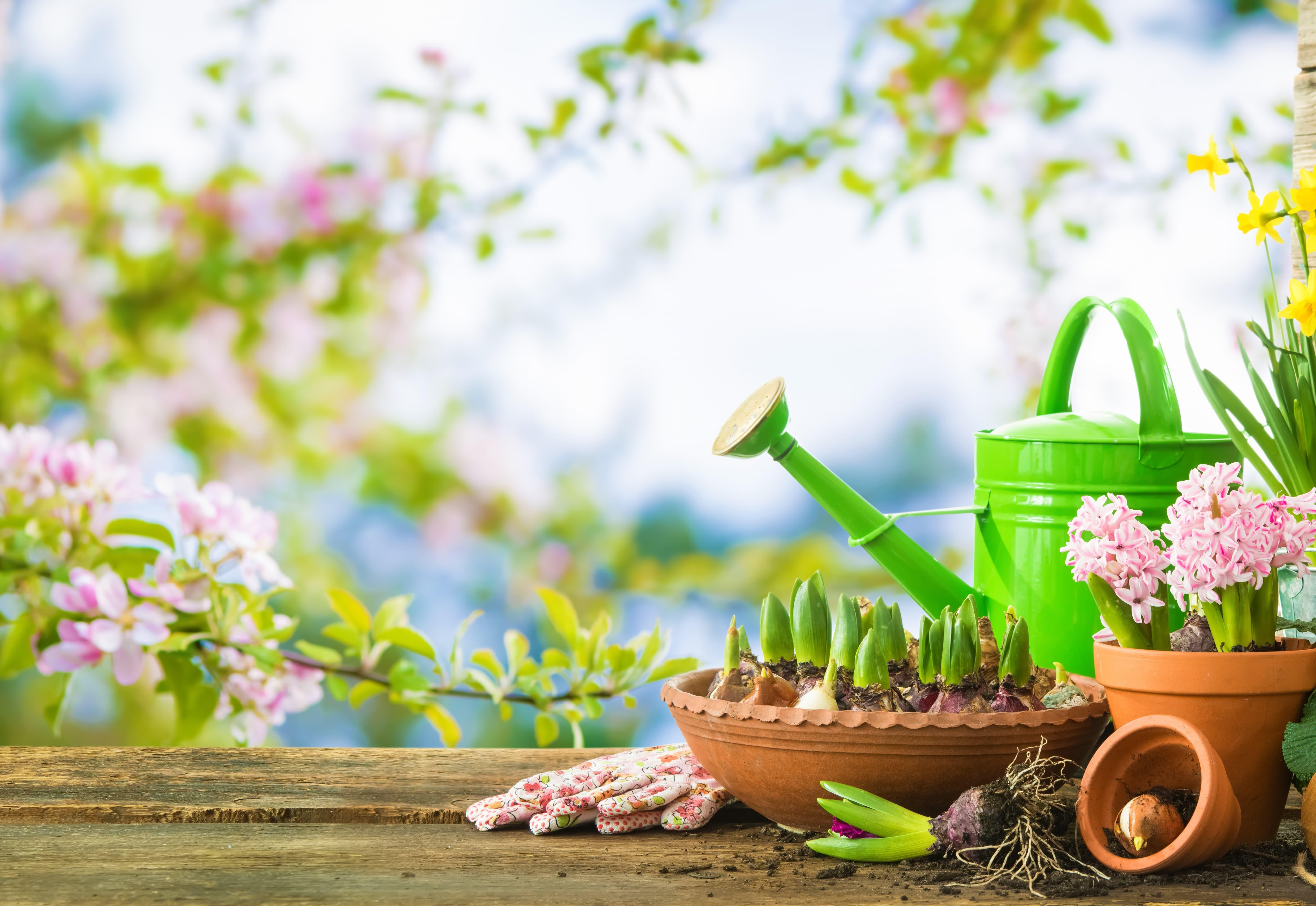 屋外の植木鉢とジョウロ