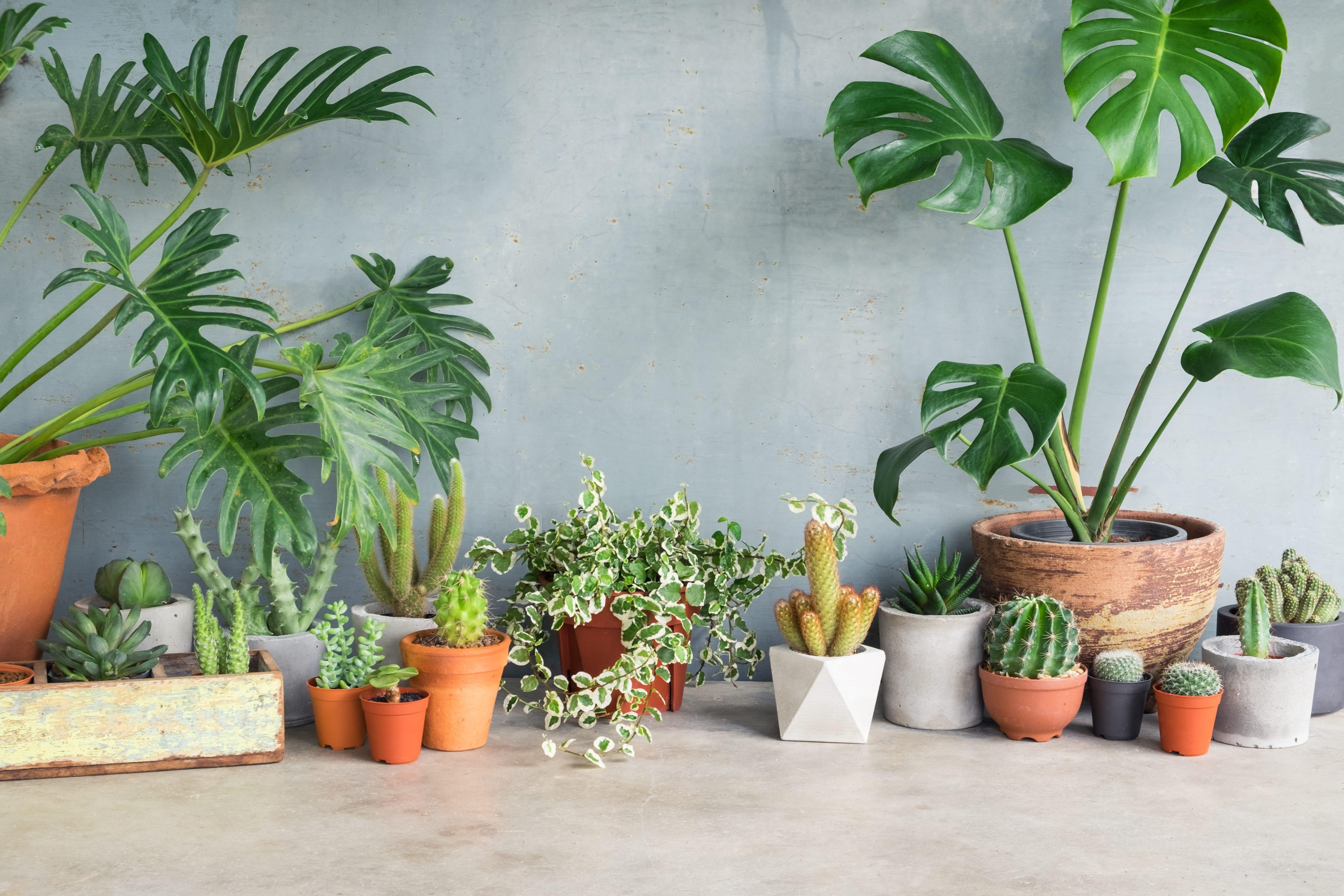 色々な観葉植物