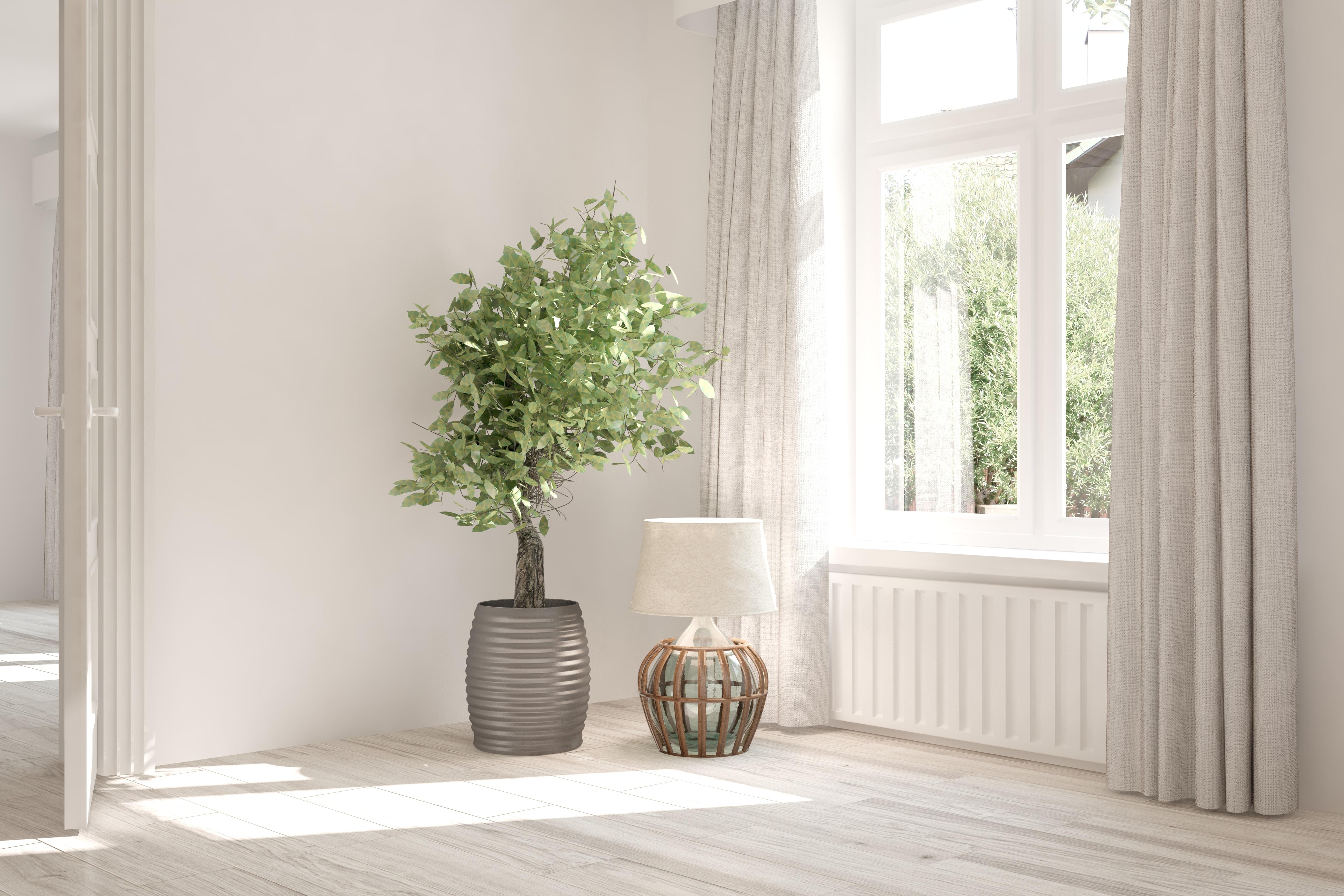 広い部屋の観葉植物