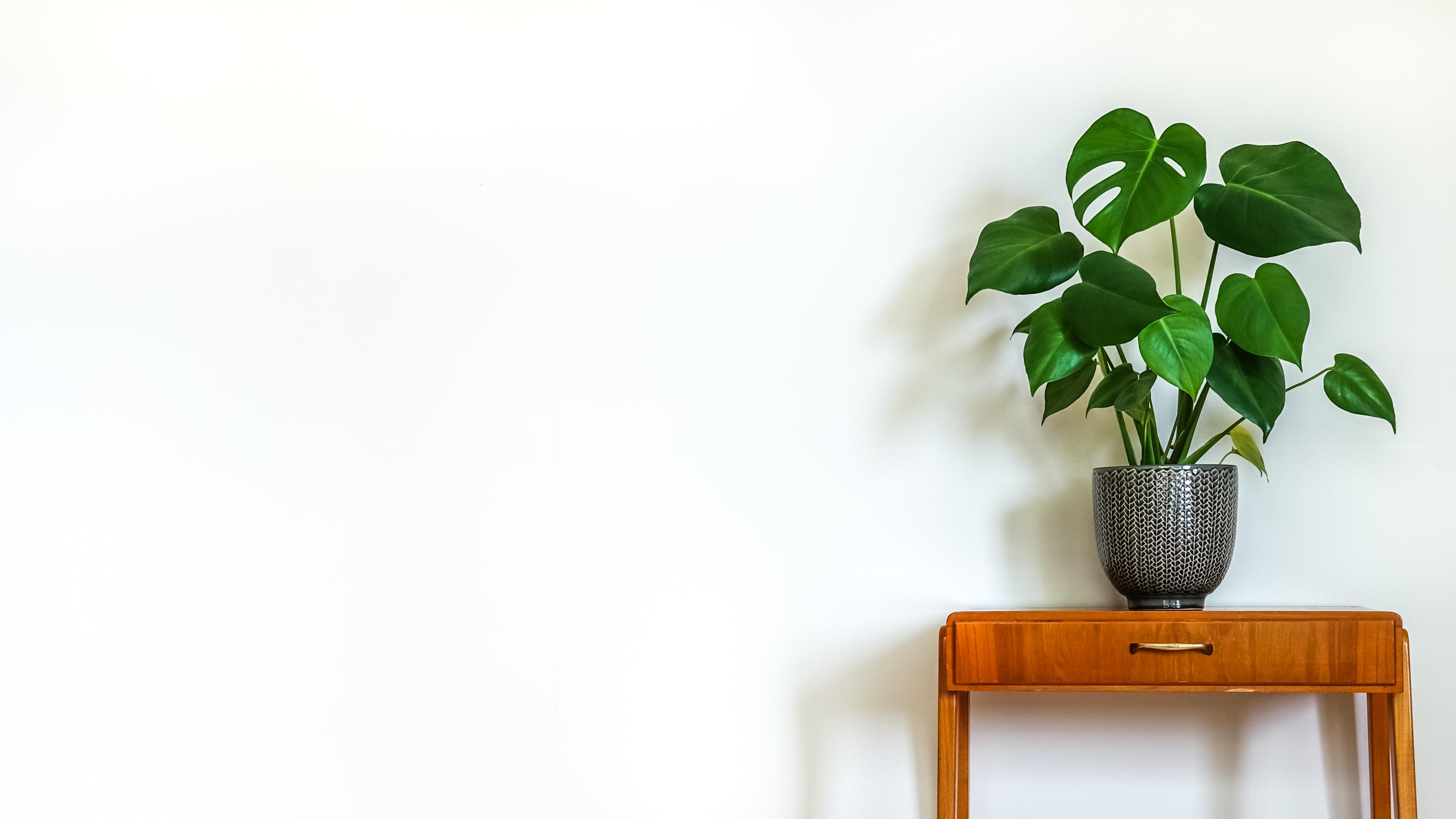 ハートの観葉植物