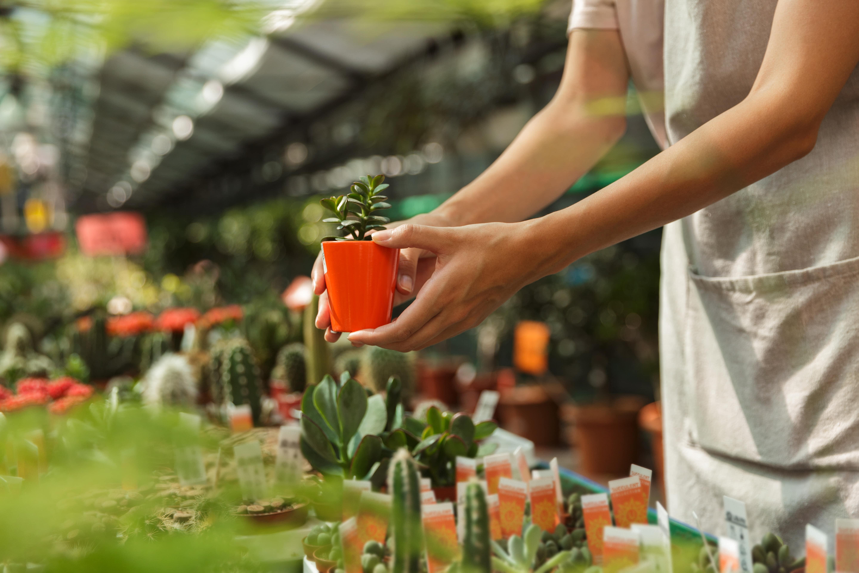 観葉植物を選ぶ