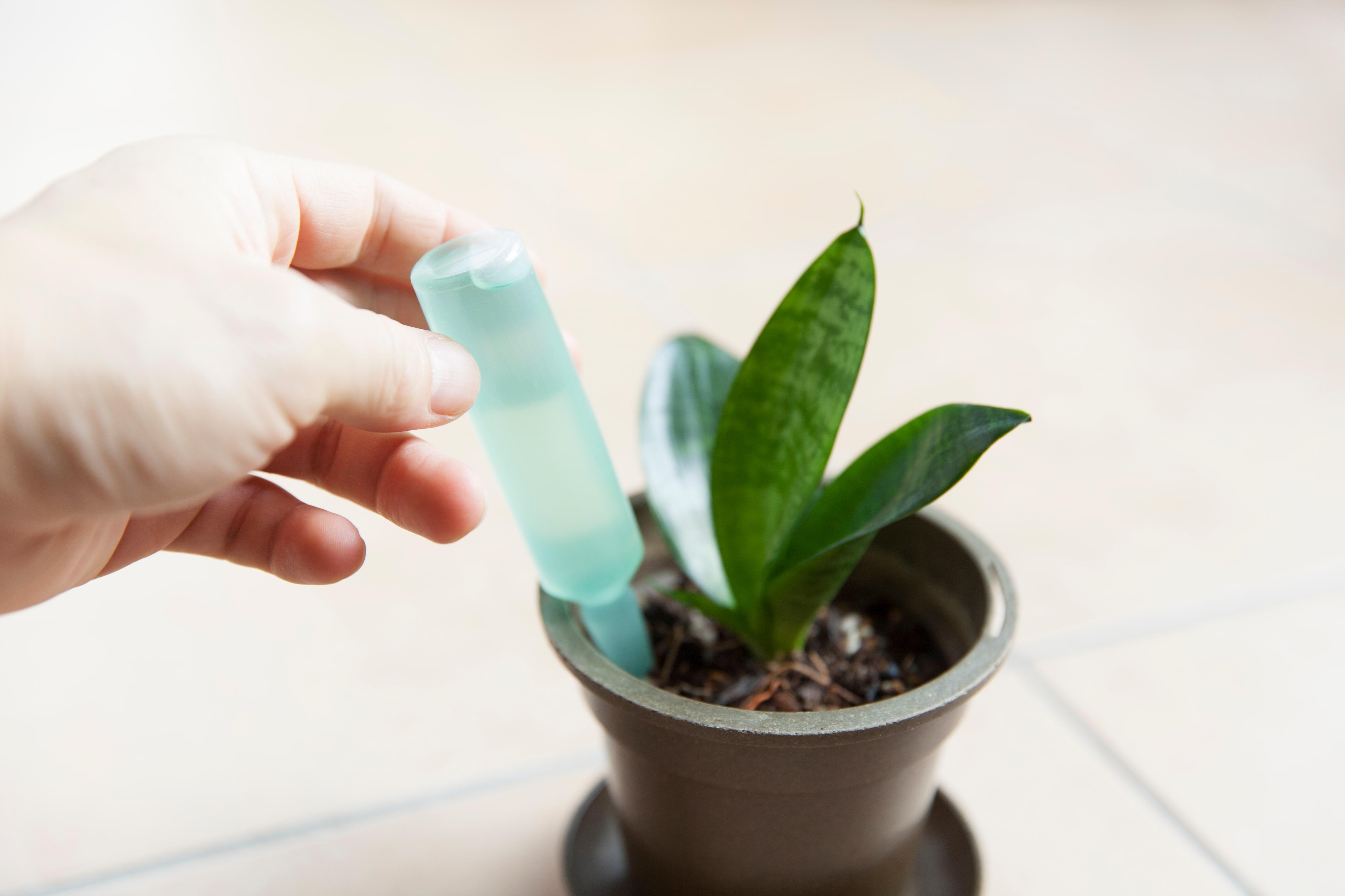 胡蝶蘭の液体肥料