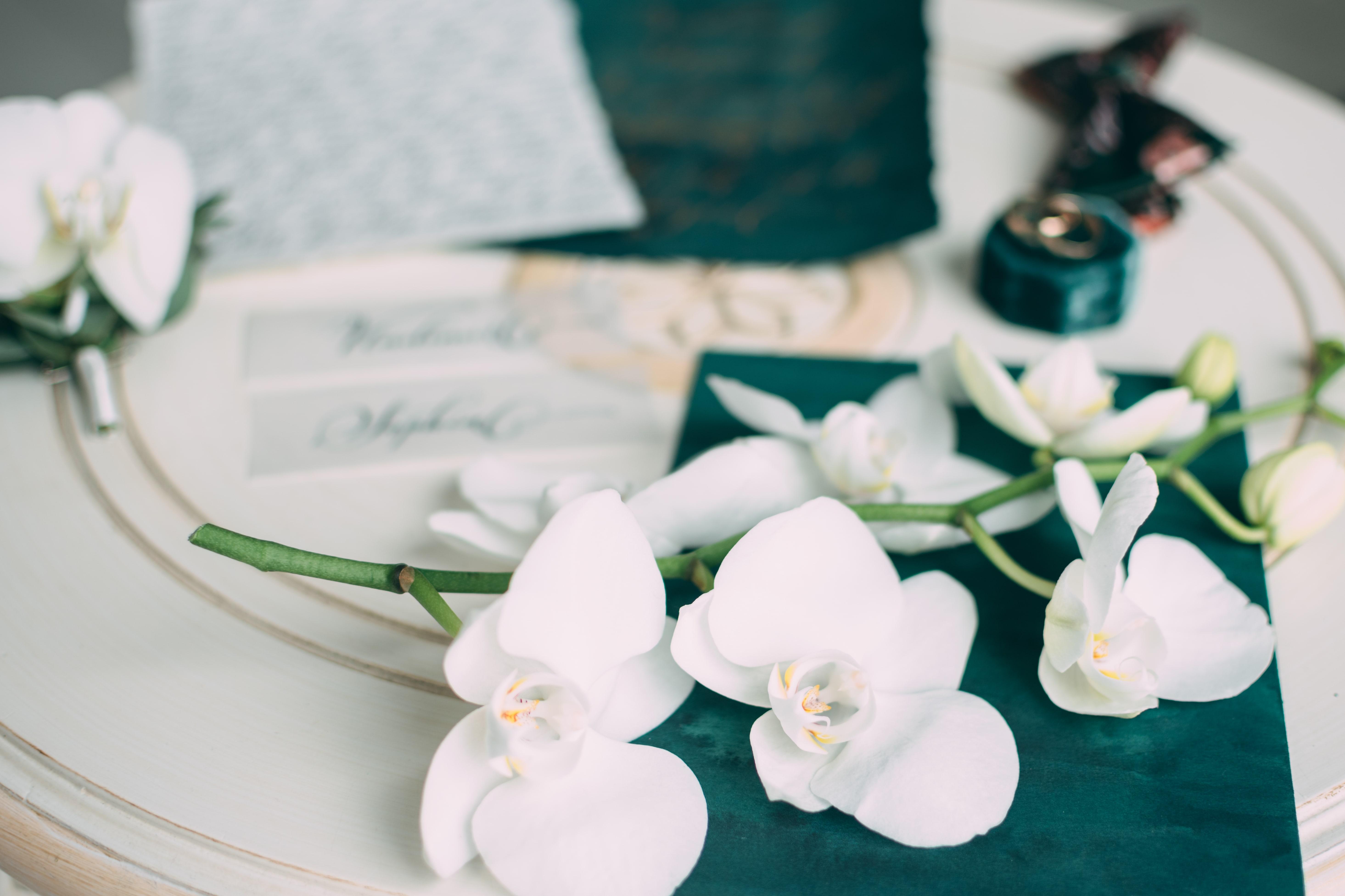 白い胡蝶蘭一茎