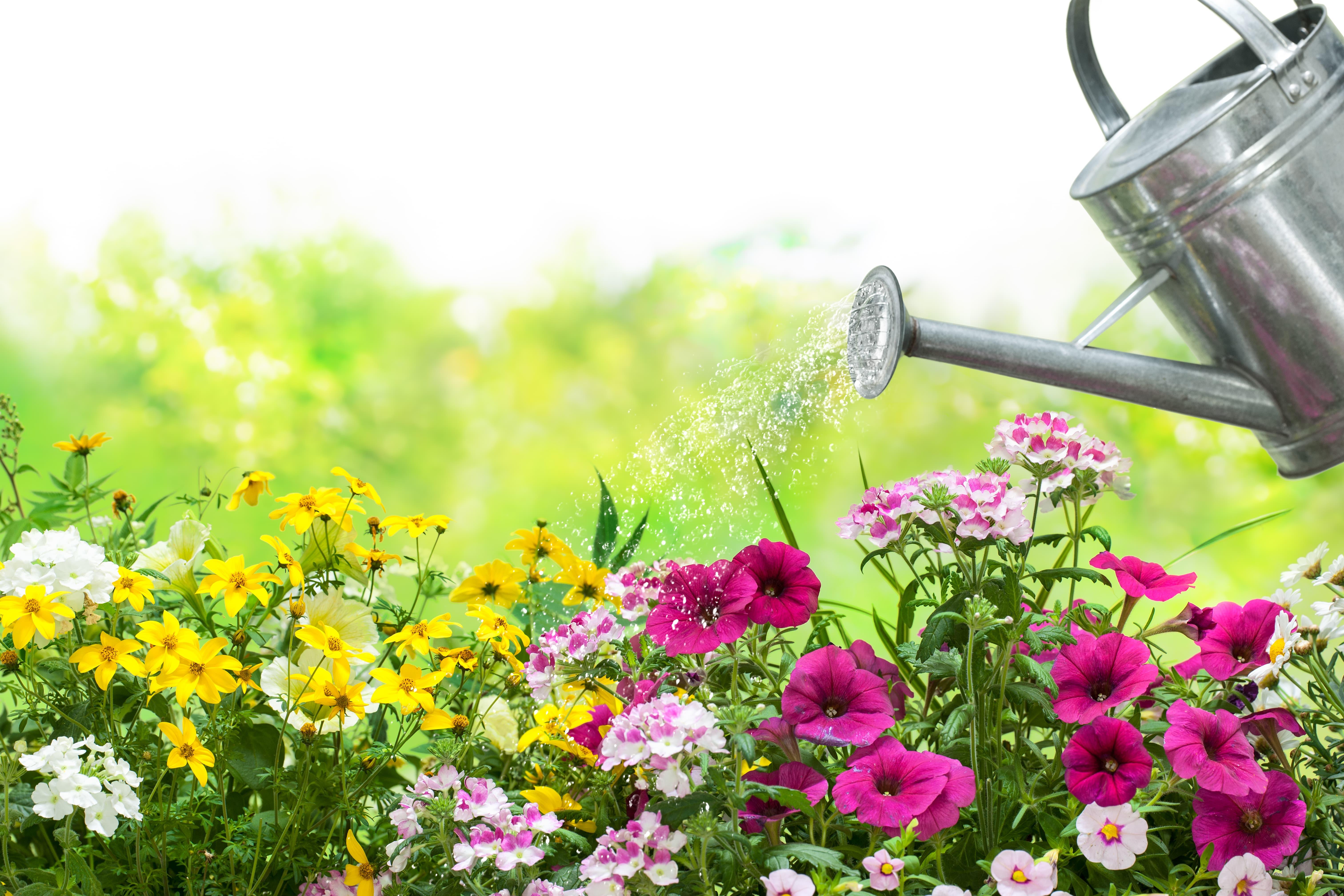花壇に水やり
