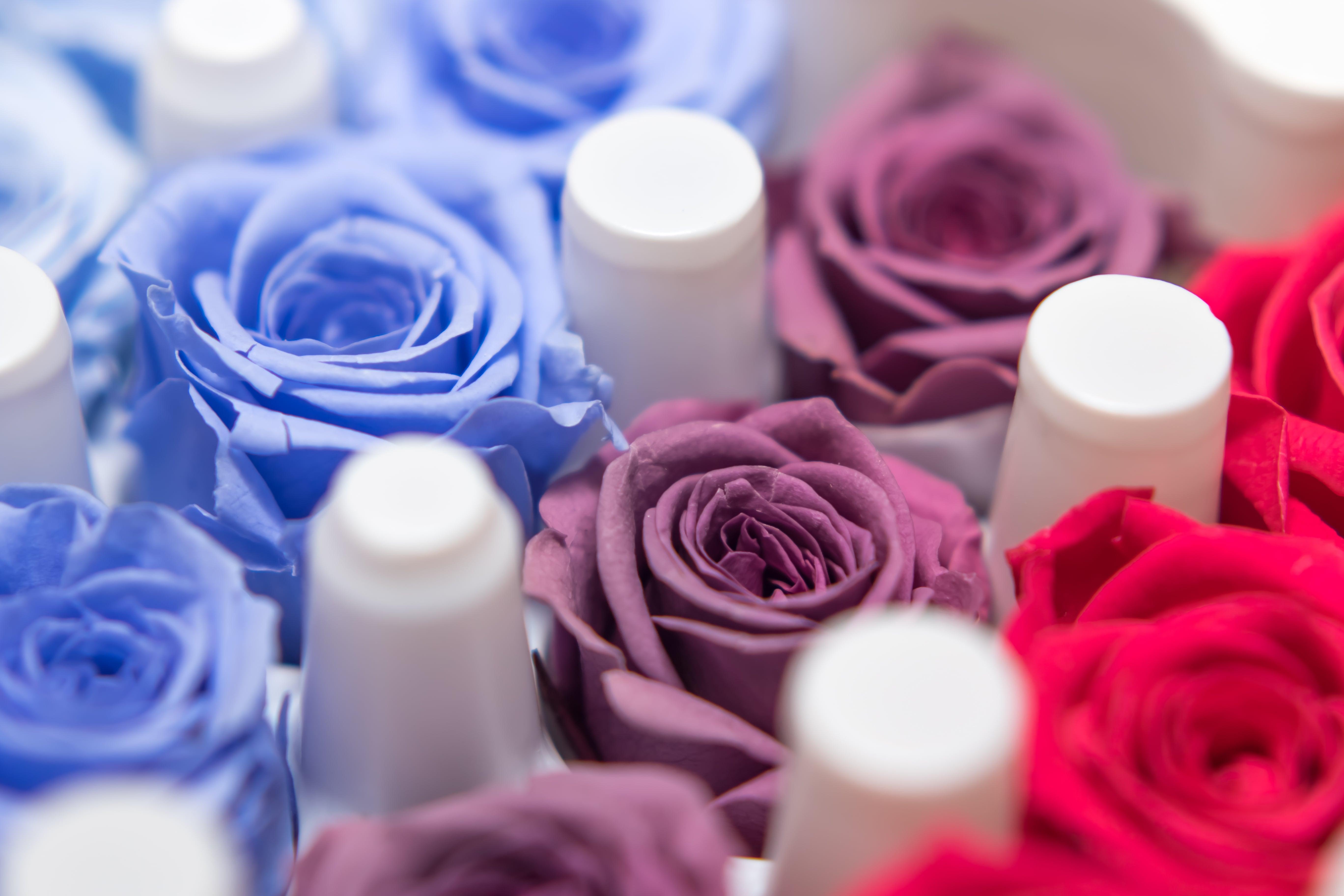 青や紫のバラの写真