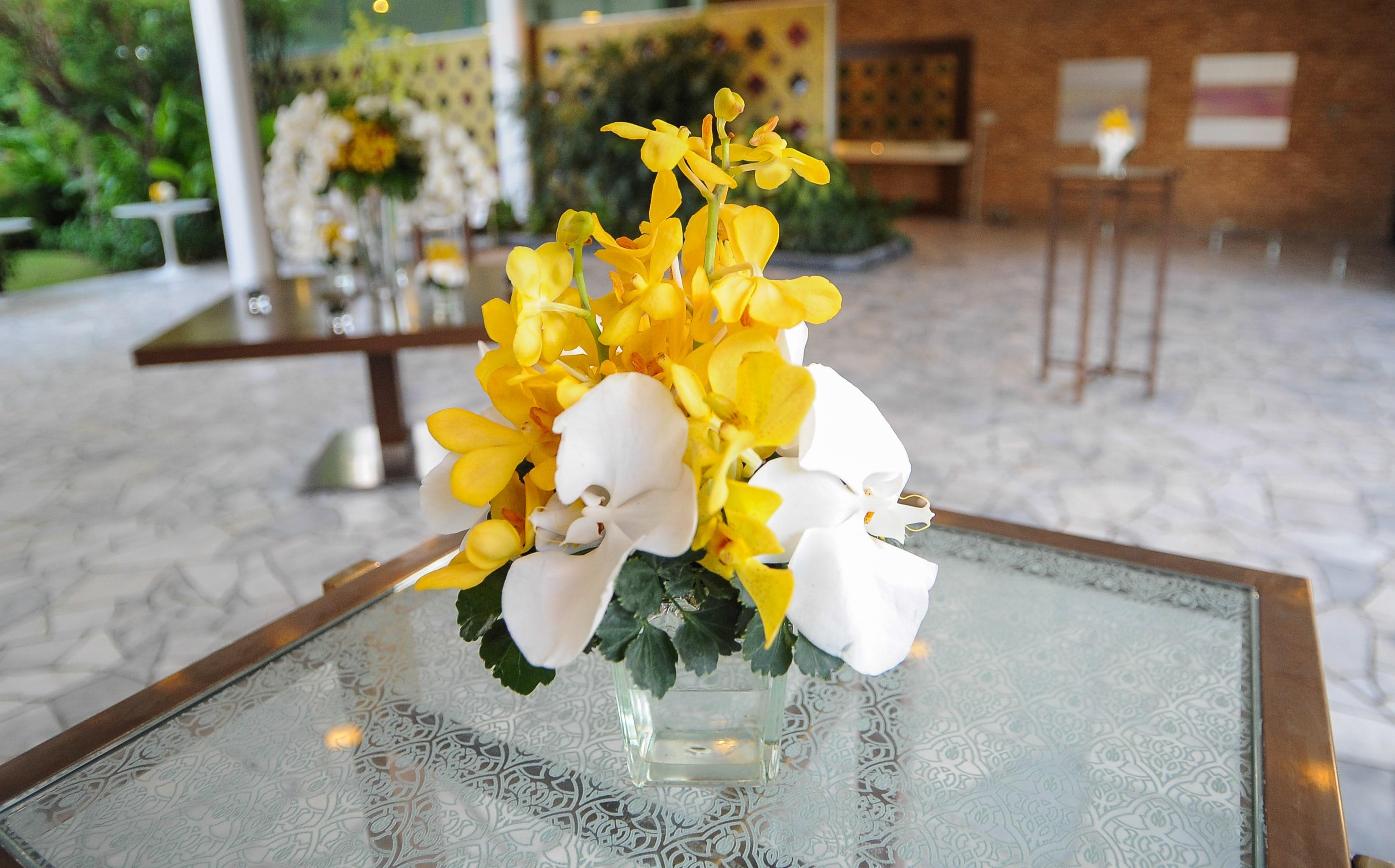 切花の胡蝶蘭